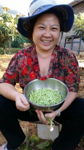May with soy beans just harvested from the field