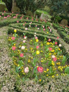 Formal tulip garden