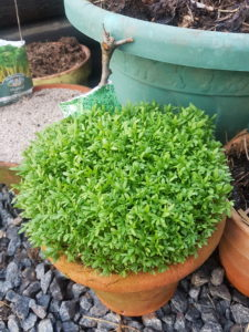 Home grown micro greens - Garden to table throughout the summer
