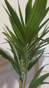 Palms grow beautifully indoors