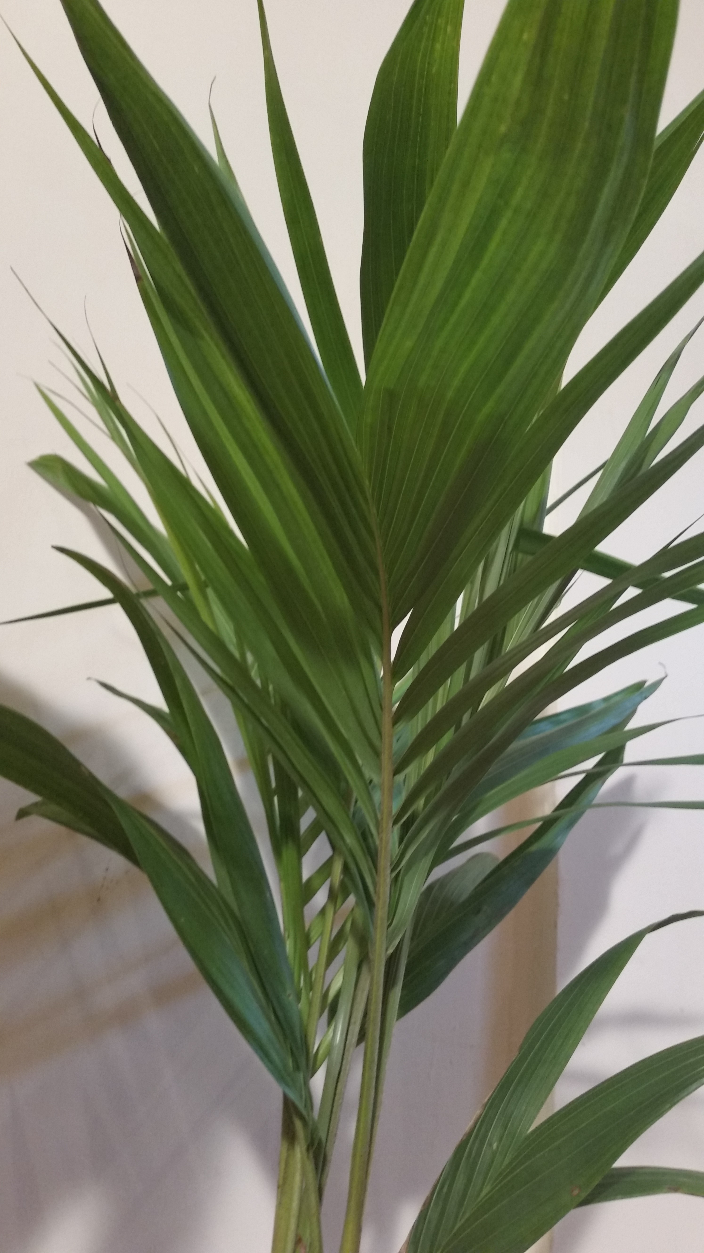 Breathe clean air with indoor plants for healthy lungs - Healthiest houseplants fresh air delight ...