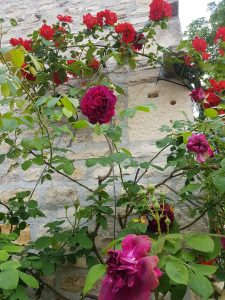 Roses grow in France like weeds, everywhere making and such a statement.